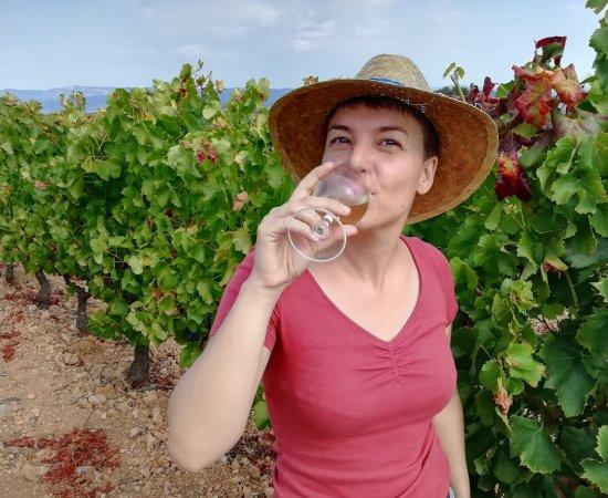 Déguster les vins du Coeur d'Hérault