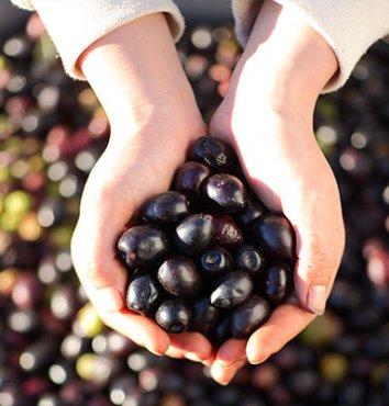 Poignée d'olives noires – Olidoc Clermont l'Hérault - produits du Languedoc