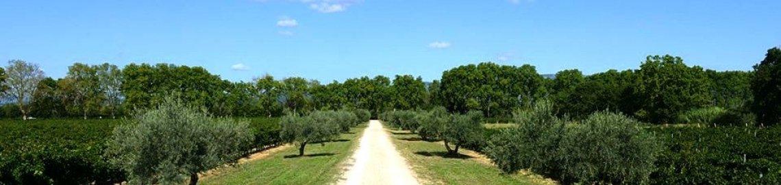 Allée d'oliviers, Domaine de la Grande Sieste à Aniane, Languedoc
