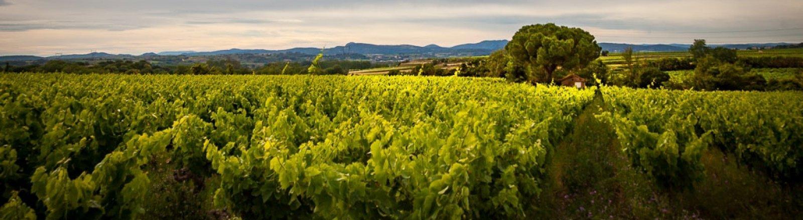 DOMAINE LES QUATRE AMOURS © Sud de France Développement