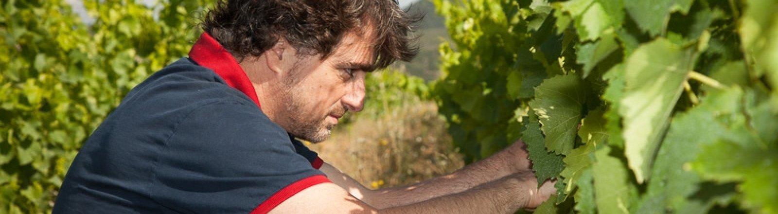 DOMAINE VIRGILE JOLY © Sud de France Développement