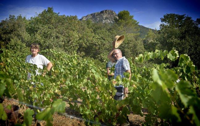 Travail dans les vignes sur le terroir de l'AOC Languedoc Cabrières - Estabel