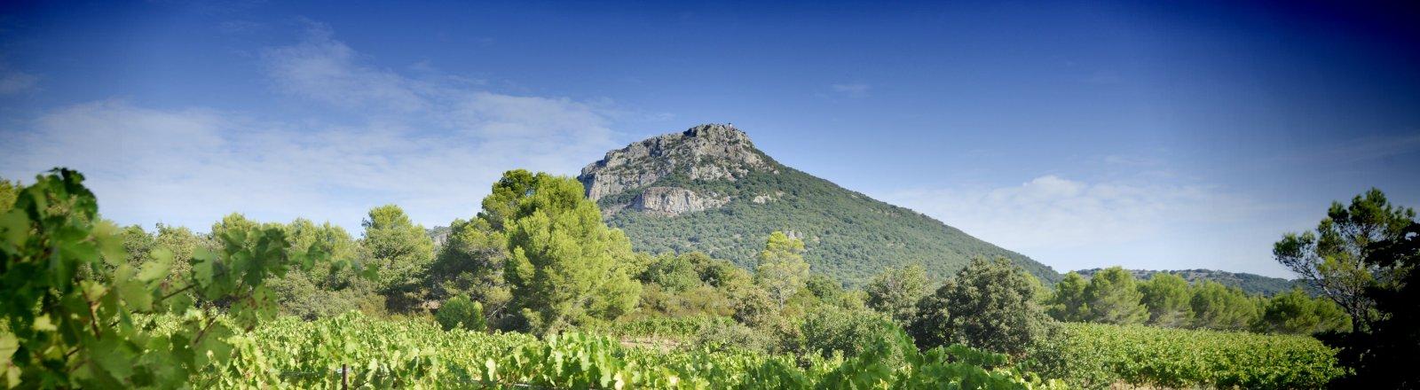 Vue sur les vignes et le Pic de Vissou à Cabrières © Olivier Diaz de Zarate