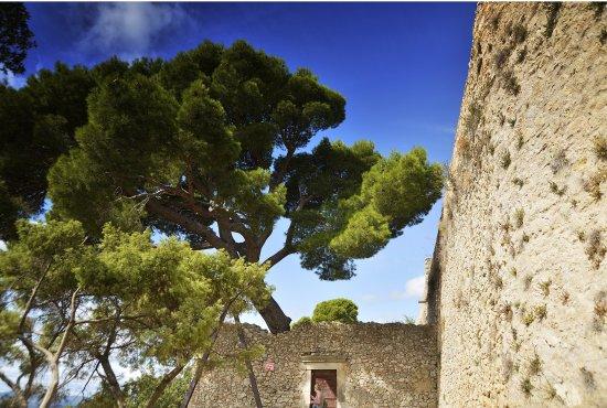 Castellas Montpeyroux