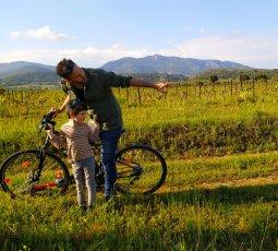 Vélo dans les vignes en Languedoc, Coeur d'Hérault 1
