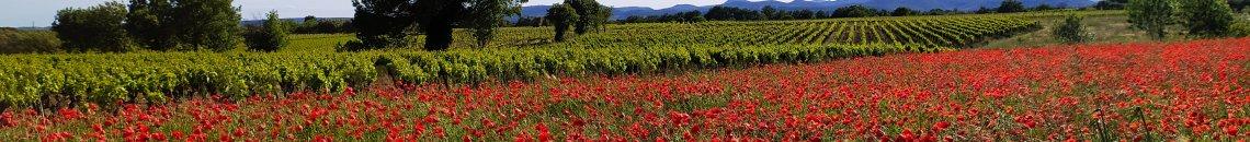 Le vignoble du Languedoc Coeur d'Hérault au printemps