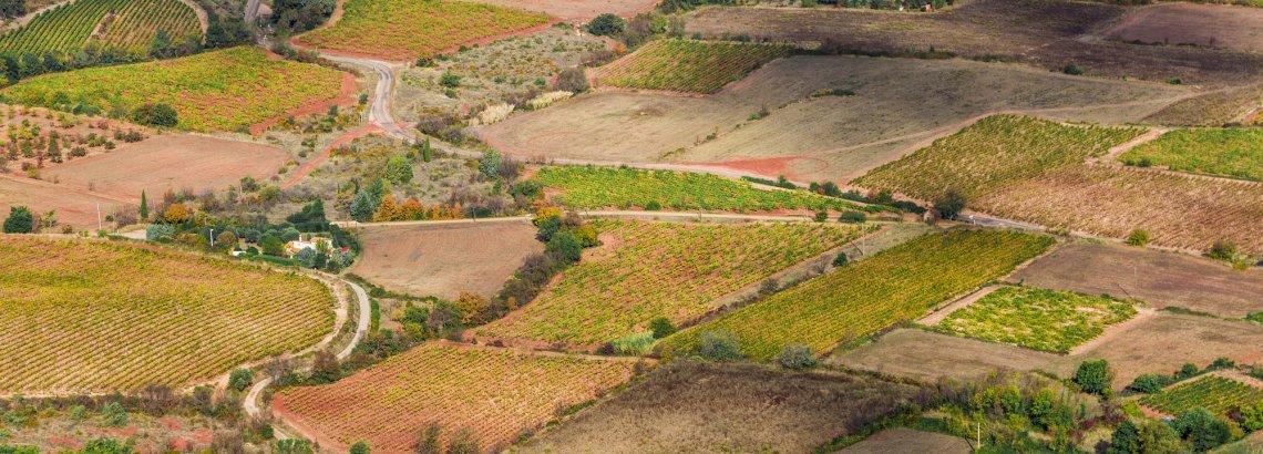 Paysages de vignes en coeur d'Hérault