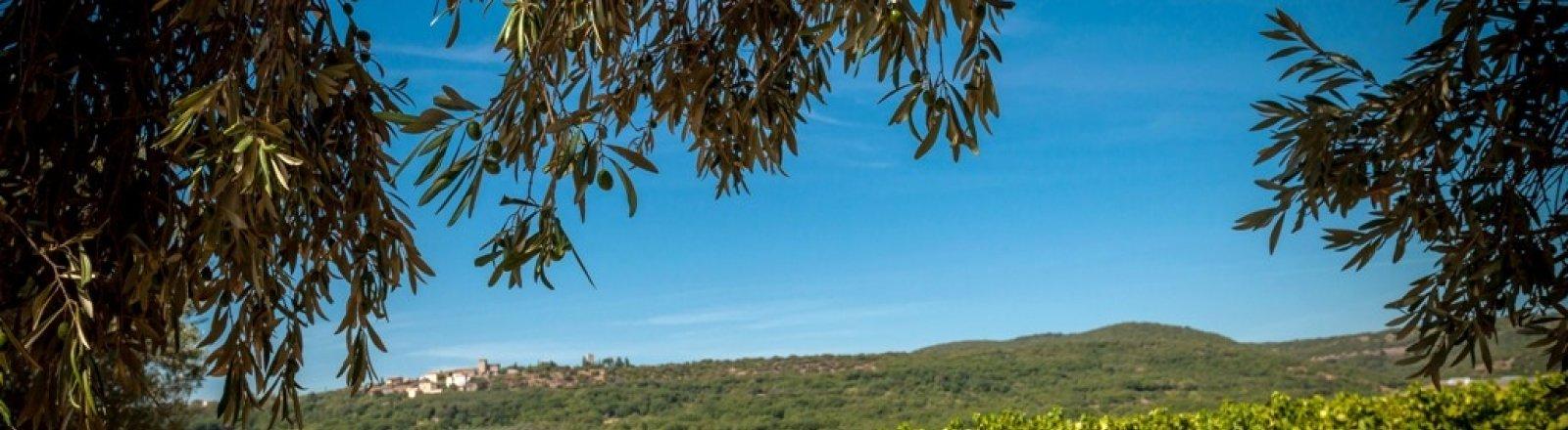 LES VIGNERONS DE SAINT-FELIX - SAINT-JEAN  © 2016 - Sud de France Développement/Vignoble des deux terres - Office de tourisme du Clermontais