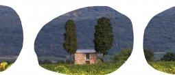 """Couverture """"Patrimoine viticole en Coeur d'Hérault"""""""