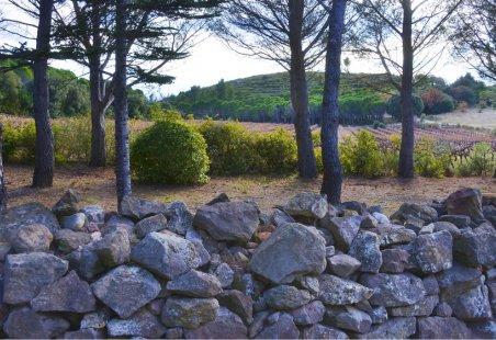 Paysage viticole - Terrasses du Larzac