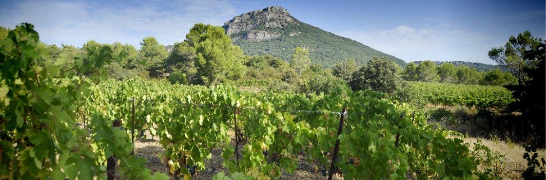 Paysage viticole - Pic de Vissou à Cabrières, Hérault, Languedoc