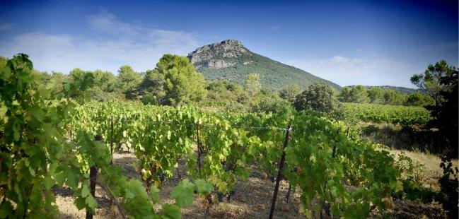 Paysage viticole - Pic de Vissou