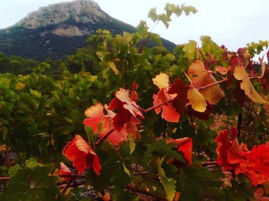 Oenotourisme au Pic de Vissou en automne